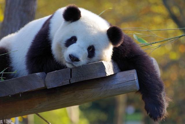 ZooParc de Beauval // 28 août 2021 = 78€ adulte, 66€ enfant